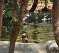 die Affen baden und springen von den Bäumen (3m) hinunter in den Teich - platsch