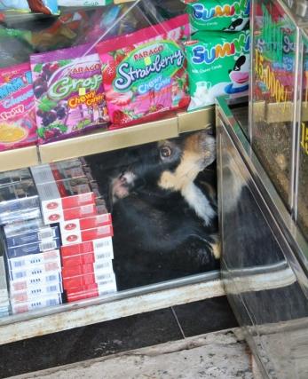 Hund im Supermarkt-Regal. Dem gefiel es gar nicht, dass wir ihn so lustig fanden.