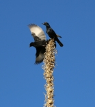 Noch gibt es nicht viel afrikanisches Tierzeug ... wenigstens ein paar Vögel :-)