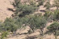 Haha, eine Giraffe, wenn auch aus großer Entfernung.