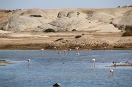 Flamingos, die hatten wir kurz hinter Swakopmund gar nicht erwatet.