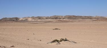 Die Wüste hat viele Gesichter.