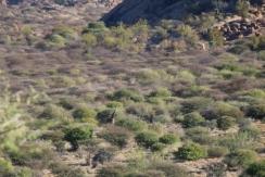 Wer findet die Giraffe?