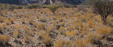 Tolle Farben, auch in der Wüste.