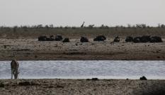 Tolle Szene an einem der zahlreichen Wasserlöcher, gerade die Giraffe im Hintergrund...