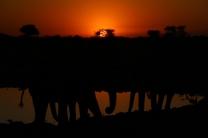 Elefanten beim Sundowner am Wasserloch.