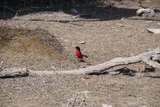 """Wunderschöner Vogel, wir haben ihn """"Rotvogel"""" getauft ;-)"""