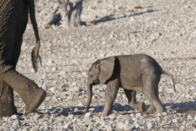 Total süß, die kleinen Elefanten.