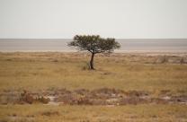 Baum - Grasland - Salzpfanne.