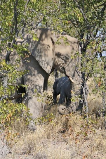 Treffen wir immer wieder, Elefanten.