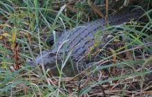 Wo Flüsse sind finden sich immer zahlreiche Krokodile.