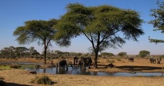 Grandioses Bild auf Elefanten an einem Wasserloch - besonders, da dies 50m von unserem Zeltplatz stattfand.