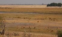 Blick auf den Chobe River.