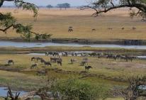 Überall kleine Herden am Fluss.