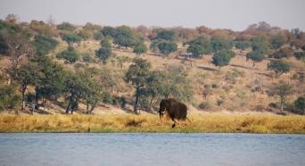 Jede Menge Elefanten gibt es, nah und fern.