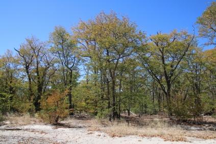 Farben wie im Herbstwald.
