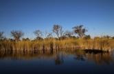Typische Landschaft in den wasserführenden Regionen des Okavango Delta.