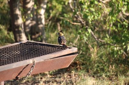 Die Vogelwelt ist beeindruckend - am besten kann man die Vögel am Frühstückstisch beobachten.