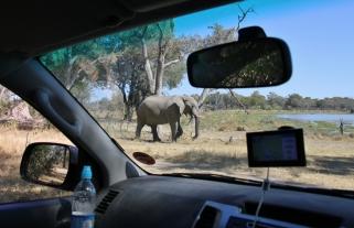 Auch für uns keine Überraschung mehr - ein Elefant direkt vor unserem Wagen.