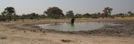Ein typisches Wasserloch - die Elefanten sind immer der Chef. Wenn sie trinken wollen, wird jeder verscheucht.