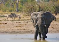 Der Elefant ist imposant und lustig sind die Zebras in ihrer Kuschel-Ruhe-Haltung.