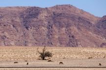 Wildpferde nahe Lüderitz / Namibia.