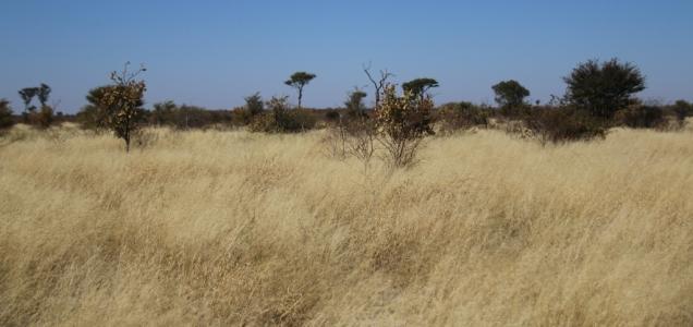 Typische Landschaft der Kalahari, eine der vielen...