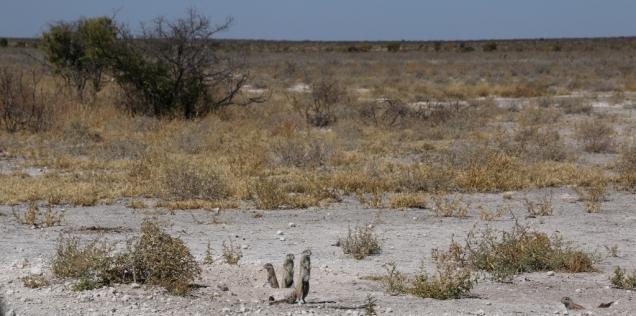 Landschaft mit drei kleinen Beobachtern.