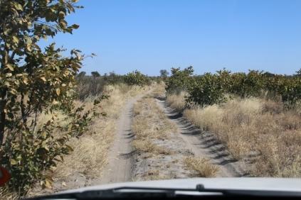 Schmaler Weg, es kratscht, wenn wir uns unseren Weg durch die Kalahari bahnen. Gut, dass unser Wagen einen widerstandsfähigen Lack hat :-)