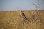 Die Vogelwelt bietet einiges zu sehen.