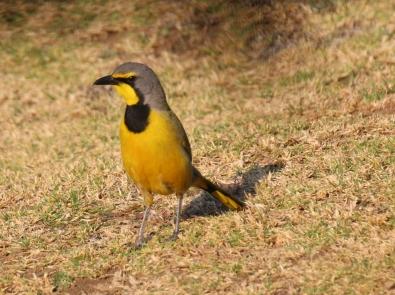 Toll, die Vögel im Süden von Afrika!