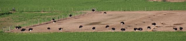 Es gibt ganze Farmen.