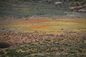 Wenn man es nicht auch aus der Nähe sehen würde, täte man kaum glauben, dass Blumen das Farbspiel produzieren.