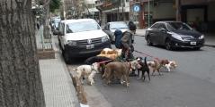 Nicht nur Tango, vor allem Hunde prägen das Stadtbild.