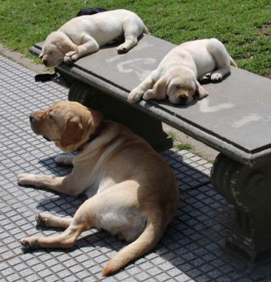 Hunde, überall, diese kleinen kann man kaufen.
