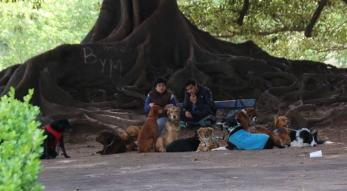 """Noch eine Kombination :-) Die professionellen """"Hundeausführer"""" machen eine Pause."""