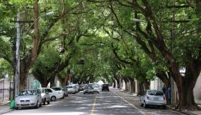 Die Alleen in einem Stadtteil von Salvador erinnern uns an Shanghai und Mendoza.
