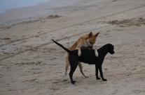 Viele Hunde in der Nähe, auch am Strand.
