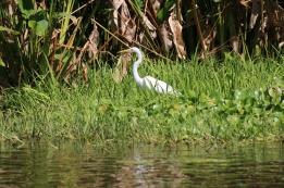 nein, tut er nicht (ein Glück) - ein toller Süßwassersee mit viel Wildlife