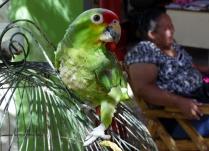 """Unser Gesellschafter beim Frühstück - """"Birdy"""""""