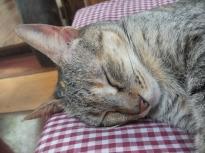 Hauskatze in der Finca - es gibt nur drei Dinge, die sie tut: Fressen, Schlafen, und sich streicheln lassen