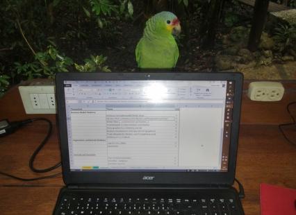 """Besuchte mich beim Arbeiten, """"Birdy"""""""