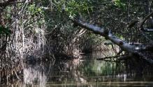 Blick auf unsere Fahrbahn in den Mangroven
