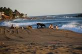Haushund ausgebüchst - auch er genießt den Strand...