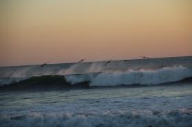wieder die Pelikane, diesmal in der anderen Richtung unterwegs...