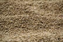 """Kaffee beim """"Lufttrocknen"""" im Hof der Kaffeeplantage"""