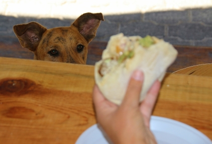 Dog meets Falafeln