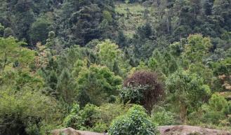 Guatemala ist ein unglaublich grünes Land