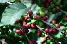 Kaffeebohnen - farbenfroh - lecker!